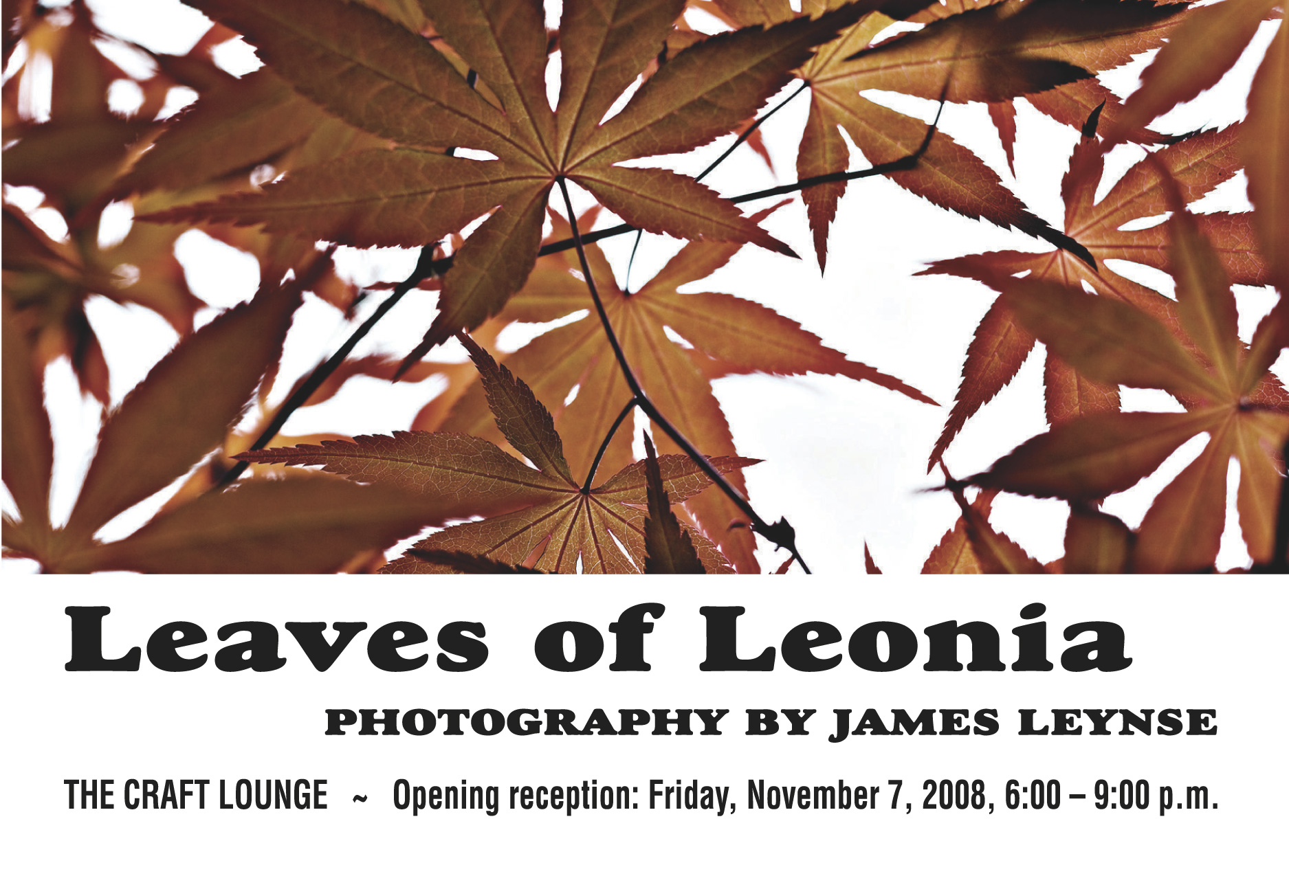 Leaves of Leonia Photography